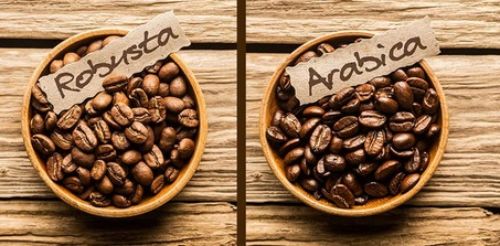 Arabica vs. Robusta